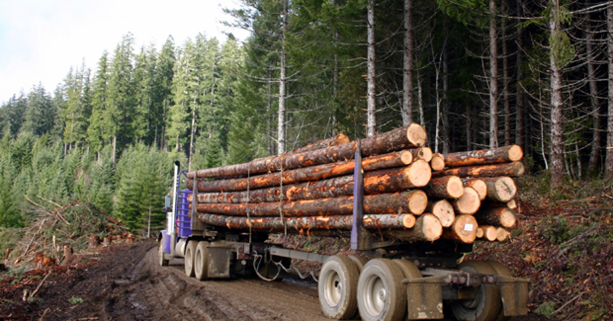 timber production Global wood markets: consumption, production and trade by ed pepke global timber trade doubled over last decade greatest increase in secondary-processed products.