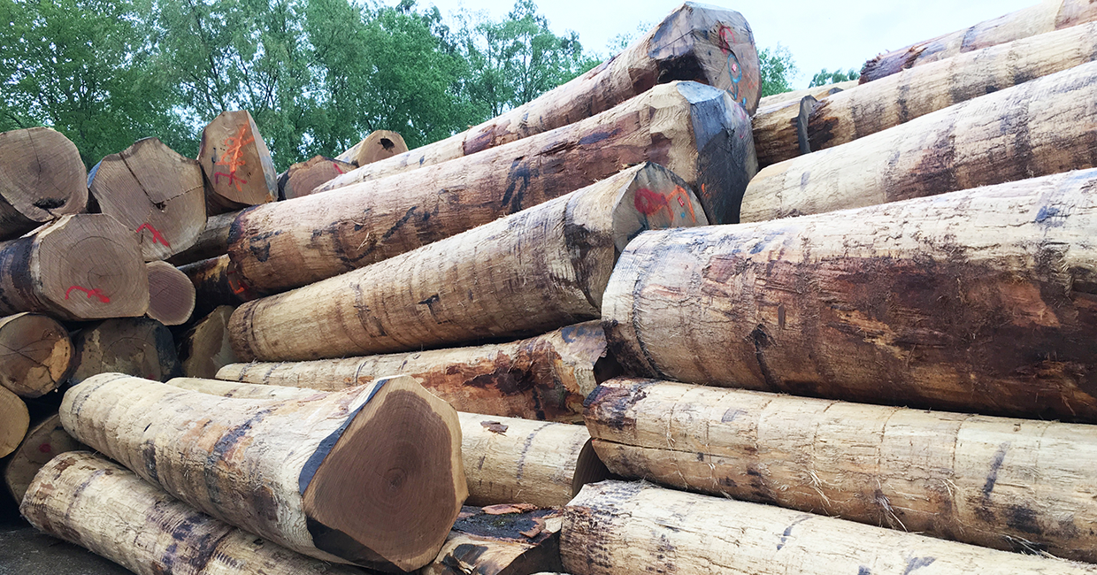 Timber imports show strong market recovery