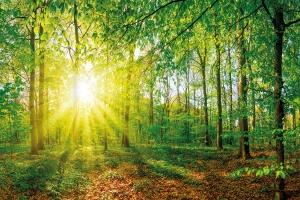 Movac and Sayerlack – the natural choice