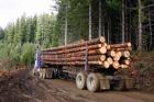 Proskills seminar at Timber Expo this week
