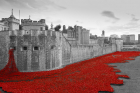 ISF Group's G-Col System helps create an historic Remembrance Day memorial