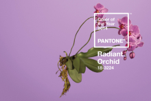 Radiant Orchid revealed as Pantone's colour of 2014