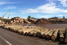 Businesses trading timber urged to prepare for change ahead of new year